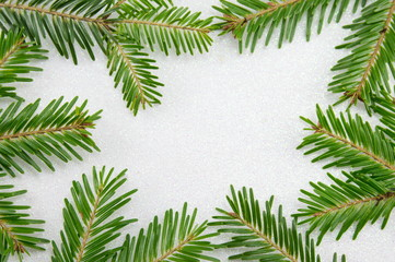 Fir tree branches on sparkling background