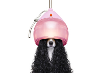 dog drying hair at hairdressers