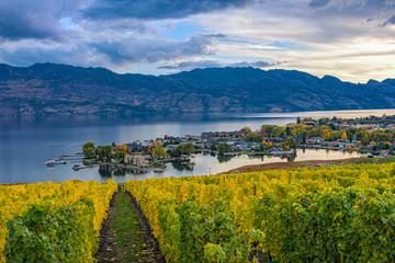 Vineyard Overlooking Okanagan Lake Kelowna BC Canada