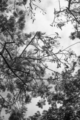 Bare branches isolated on sky