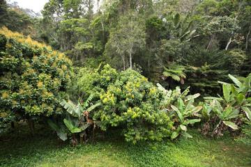Rainforest in Madagascar, Andasibe Toamasina Province