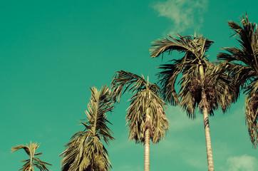Copy space of palm tree on blue sky background.