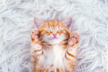 Cute little red kitten sleeps on fur