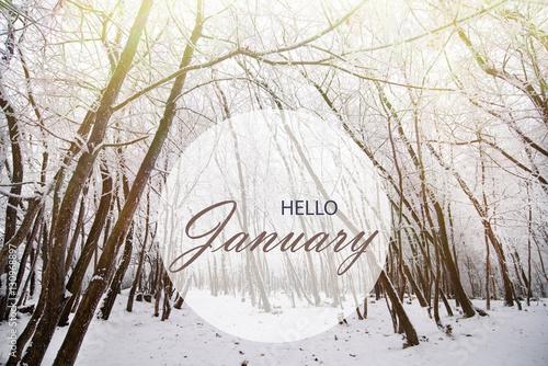Hello January Wallpaper Winter Landscape In Frozen Forest