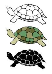 set of tortoise, turtle design vector cartoon