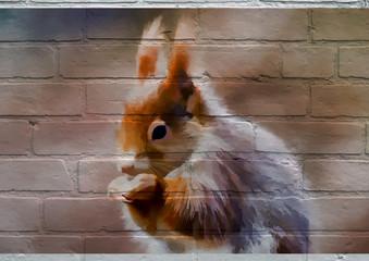 Art urbain, un écureuil roux.
