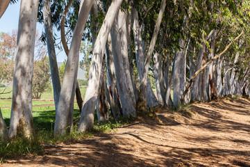 Trees Closeup Boundary