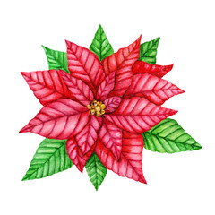 Red Poinsettia Flower. Christmas wreath. Christmas Symbols. Watercolor illustration