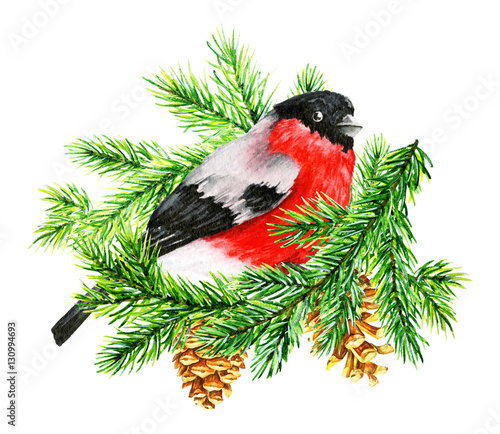 Red Cardinal Amidst Snowy Pine By Linnaea Mallette