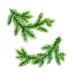 Green pine tree brunches. Christmas trees. Watercolor illustration