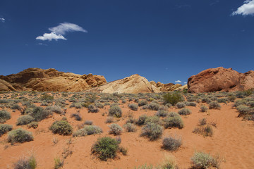 desert fauna and rocks at valley of fire