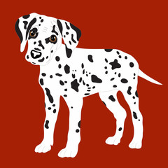 Dalmatians, cute puppy, sad. Vector Illustration Portrait of Dalmatian Puppy. Dog isolated.