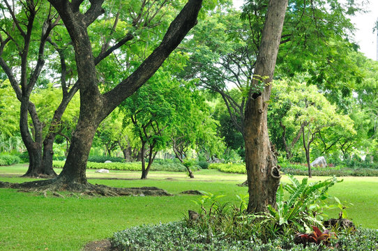 Garden decoration many trees, green yard be shady for people res