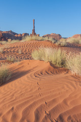 Totem Tracks - A roadrunner has left its tracks in the sand dunes leading up to the totem monument.