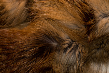 Classy and luxurious red fox fur