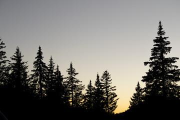 Silhouette Pine Trees Sunset Sky