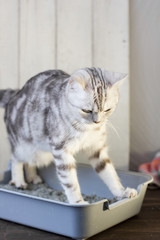Cat in the litter box.