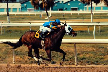 Rennpferd mit Jockey beim Pferderennen