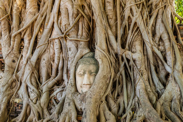 Stone head of ancient buddha statue entwined in the roots of a giant tree in Wat Mahathat, at  Ayutthaya historical park, Thailand.
