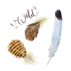 Set of watercolor feathers. Vector illustration
