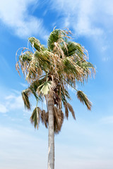 Coconut palm tree in Seychelles. Space for text