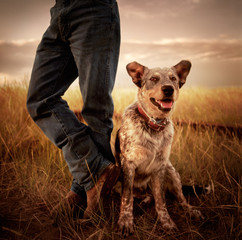 Portrait of a farm dog looking at camera. Dog is sitting next to owner who is wearing jeans and boots.