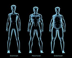 Three Male Body Types
