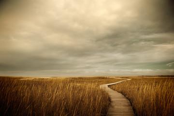 Boardwalk path to the ocean. Cape Cod, MA. USA