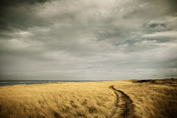 Path through high grass on a beach. Cape Cod, MA. USA