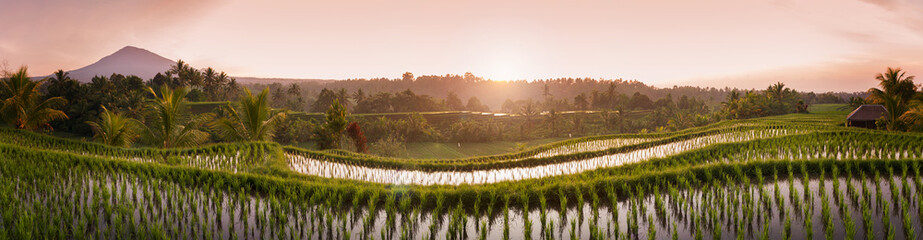 Fotorolgordijn Bali Bali Rice Fields. The village of Belimbing, Bali, boasts some of the most beautiful and dramatic rice terraces in all of Indonesia. Morning light is a wonderful time to photograph the landscape.