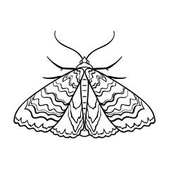 Moth icon in outline style isolated on white background. Insects symbol stock vector illustration.