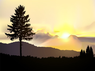 North american landscape. Silhouette of coniferous trees on the background of mountains and colorful sky. Sunset.