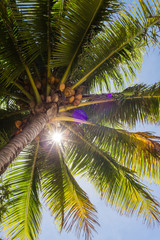 look up into the green fronds of a tropical palm tree