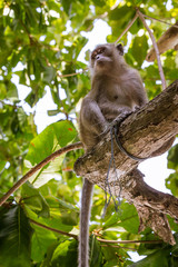 Monkey seated on a tree branch