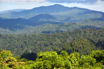 Primary rainforest scenery in Danum Valley Conservation Area, Sabah Borneo, Malaysia.