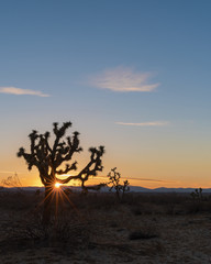 Beautiful California high desert landscape at sunset with a Joshua tree in the foreground.