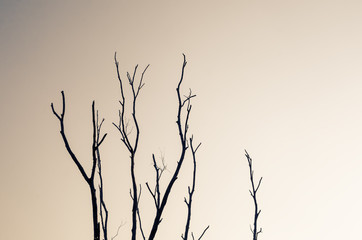 Dried nature silhouette tree branch on sky abstract background.