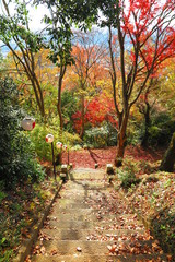 秋の神社の境内の風景2