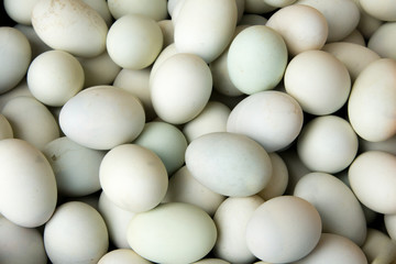 fresh duck eggs as background.
