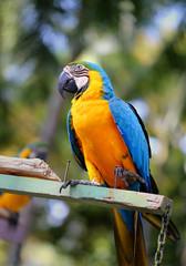 Beautiful macaw parrot