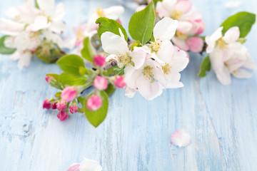 Apple blossom on blue.