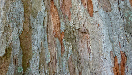 Photo sur Toile Les Textures Tree trunk texture