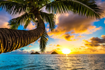 Wall Mural - Beautiful Hawaiian Sunrise at Lanikai Beach