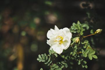 A white flower 6740.