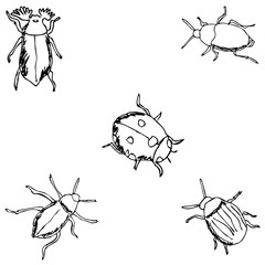 Insects. A sketch by hand. Pencil drawing
