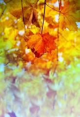 Photos bright autumn background