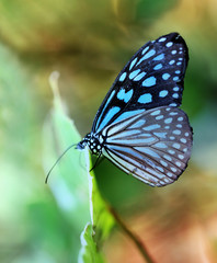 Photo of a beautiful tropical butterfly