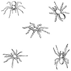 Spiders. A sketch by hand. Pencil drawing