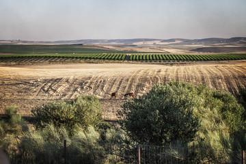 Orange farm, Sevilla, Spain, Europe  Fotoväggar