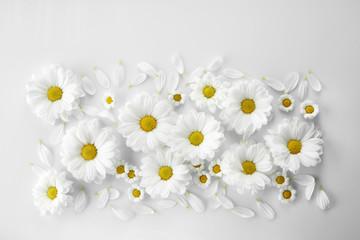 Chamomiles on white background